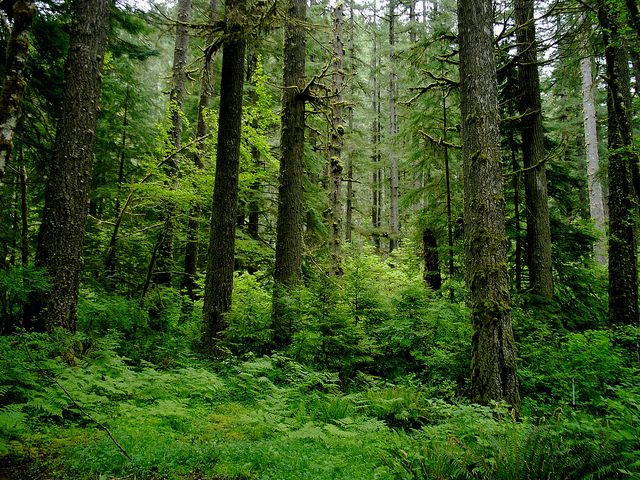 Difference Between Evergreen and Deciduous Forest_Figure 1