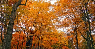 Difference Between Evergreen and Deciduous Forest