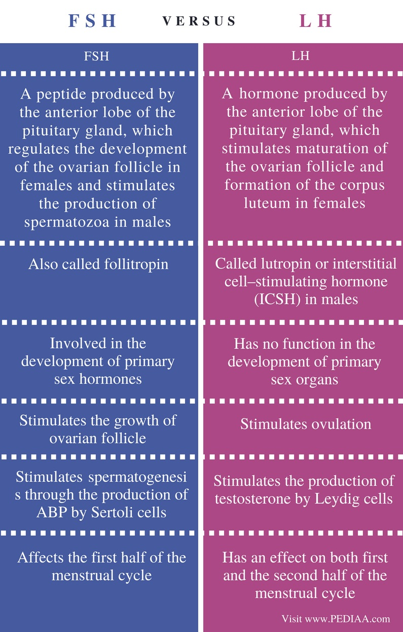 Difference Between FSH and LH - Comparison Summary
