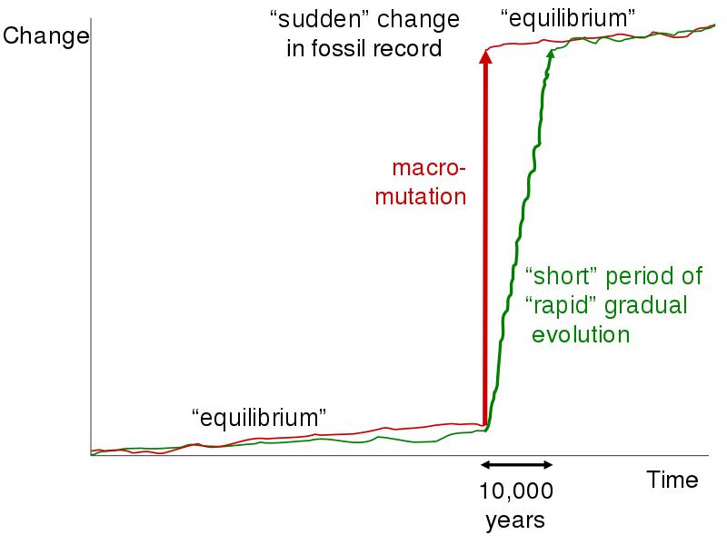 Main Between - Gradualism and Punctuated Equilibrium
