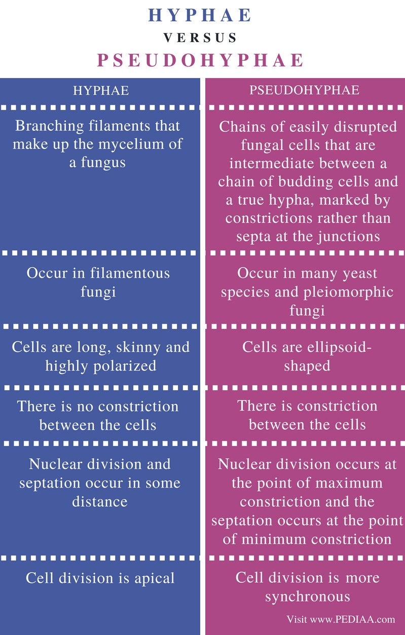 Difference Between Hyphae and Pseudohyphae - Comparison Summary