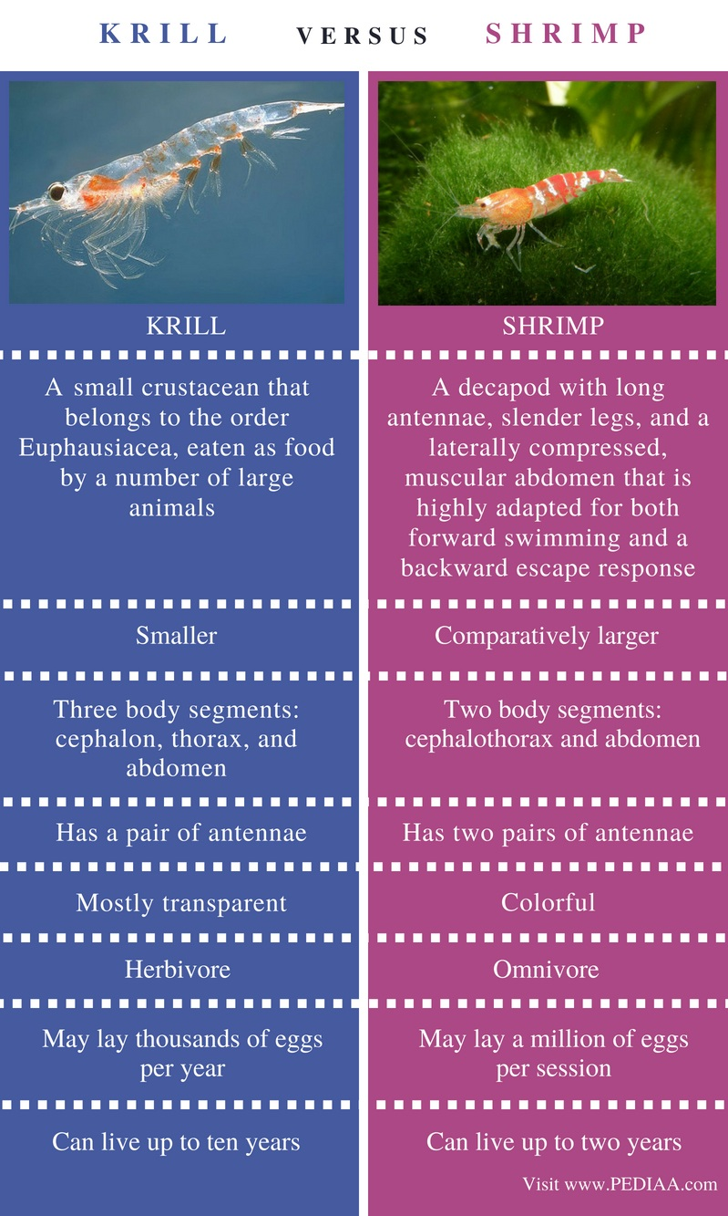 Difference Between Krill and Shrimp - Comparison Summary