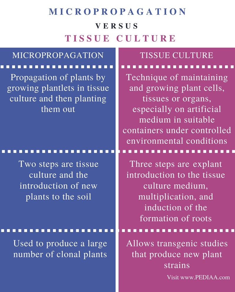 Difference Between Micropropagation and Tissue Culture - Comparison Summary