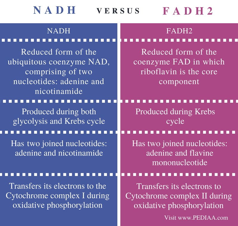 relationship between nadh and fadh2
