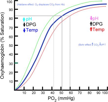 Main Difference - Oxyhemoglobin and Deoxyhemoglobin