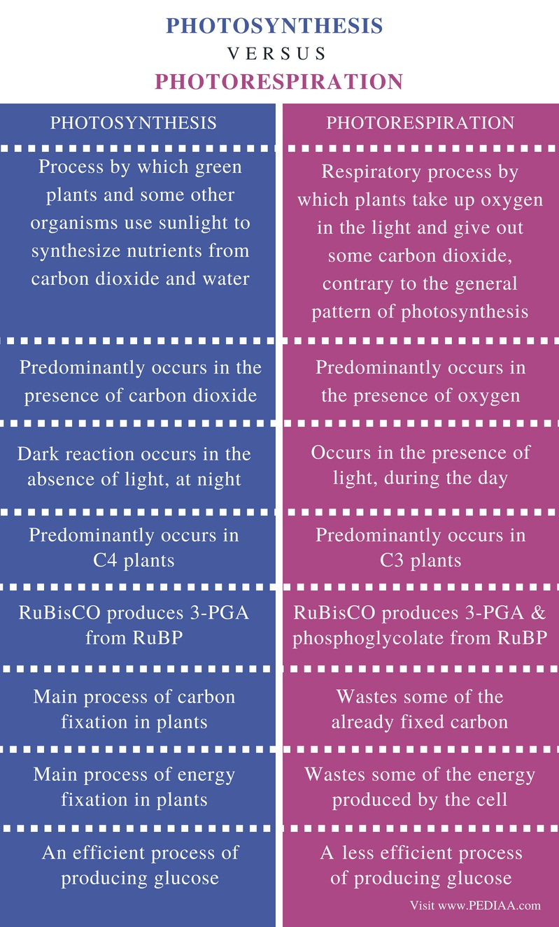 Difference Between Photosynthesis and Photorespiration - Comparison Summary