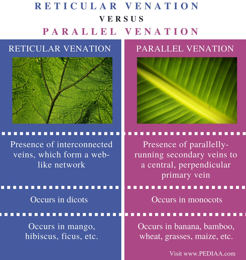 Difference Between Reticular and Parallel Venation - Comparison Summary