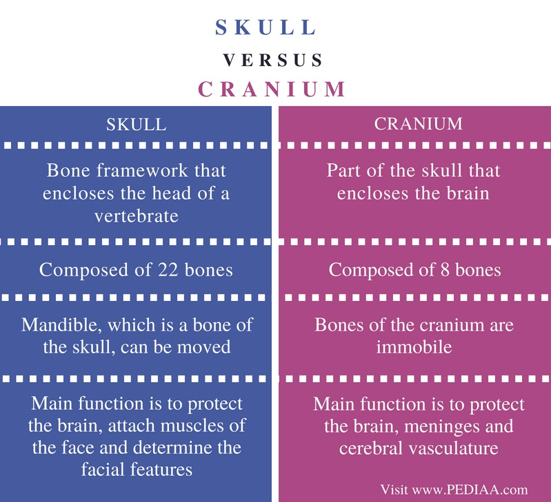 Difference Between Skull and Cranium - Comparison Summary