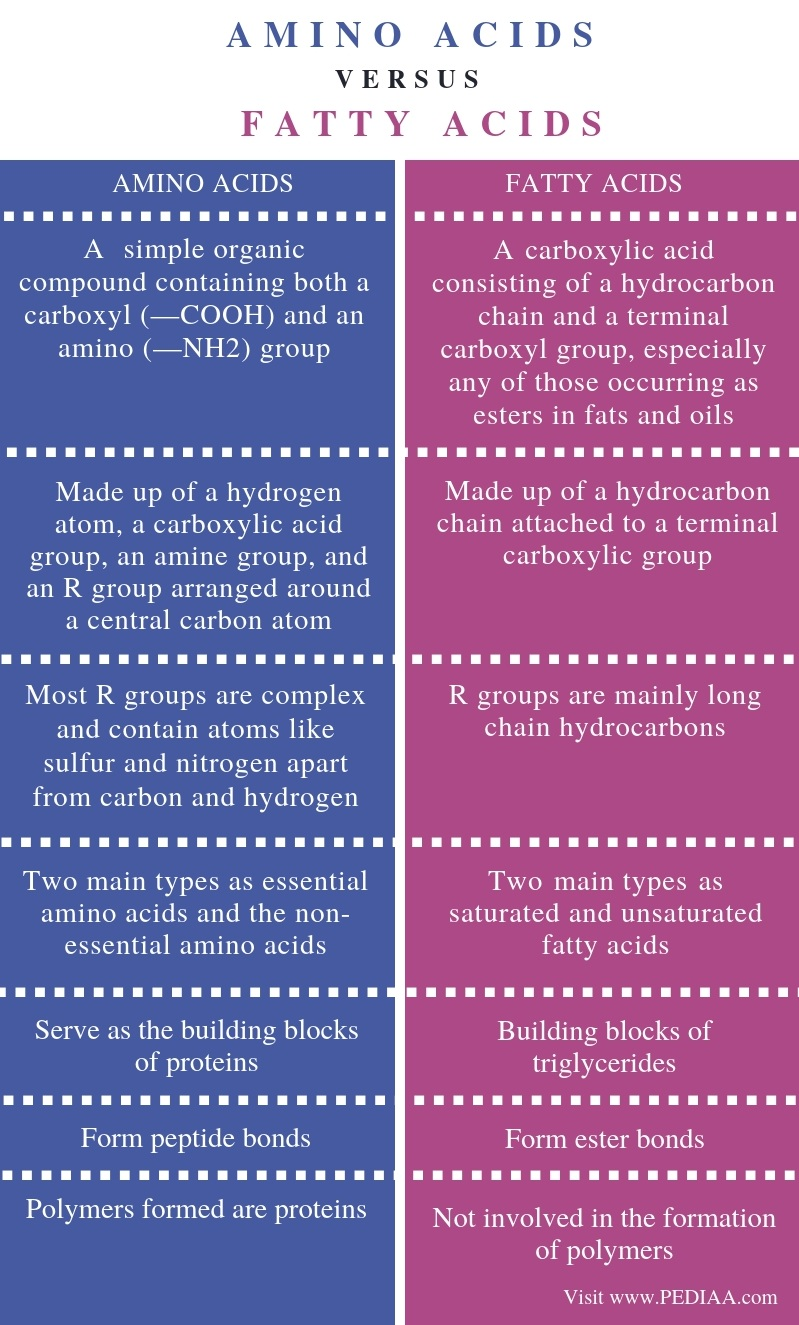Difference Between Amino Acids and Fatty Acids - Comparison Summary