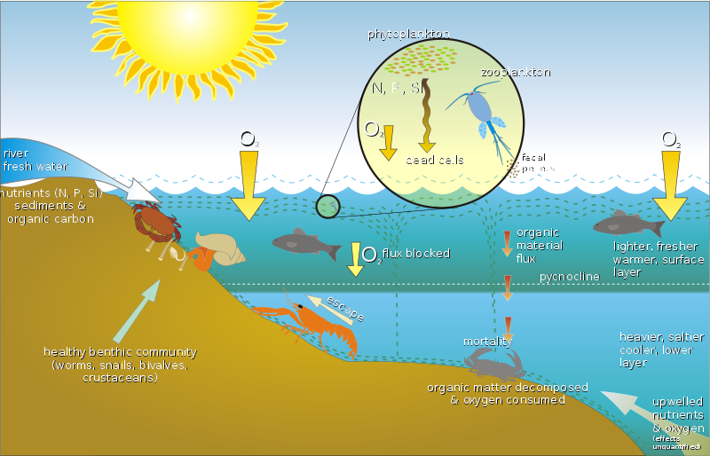 Difference Between Benthic and Pelagic