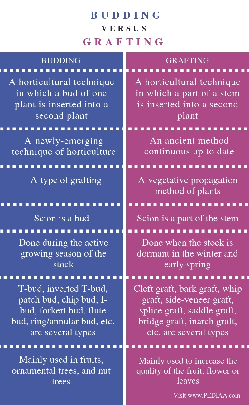 What Is The Difference Between Budding And Grafting
