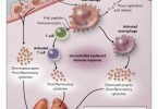 Difference Between Cytokines and Interleukins
