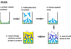 Difference Between Direct and Indirect ELISA
