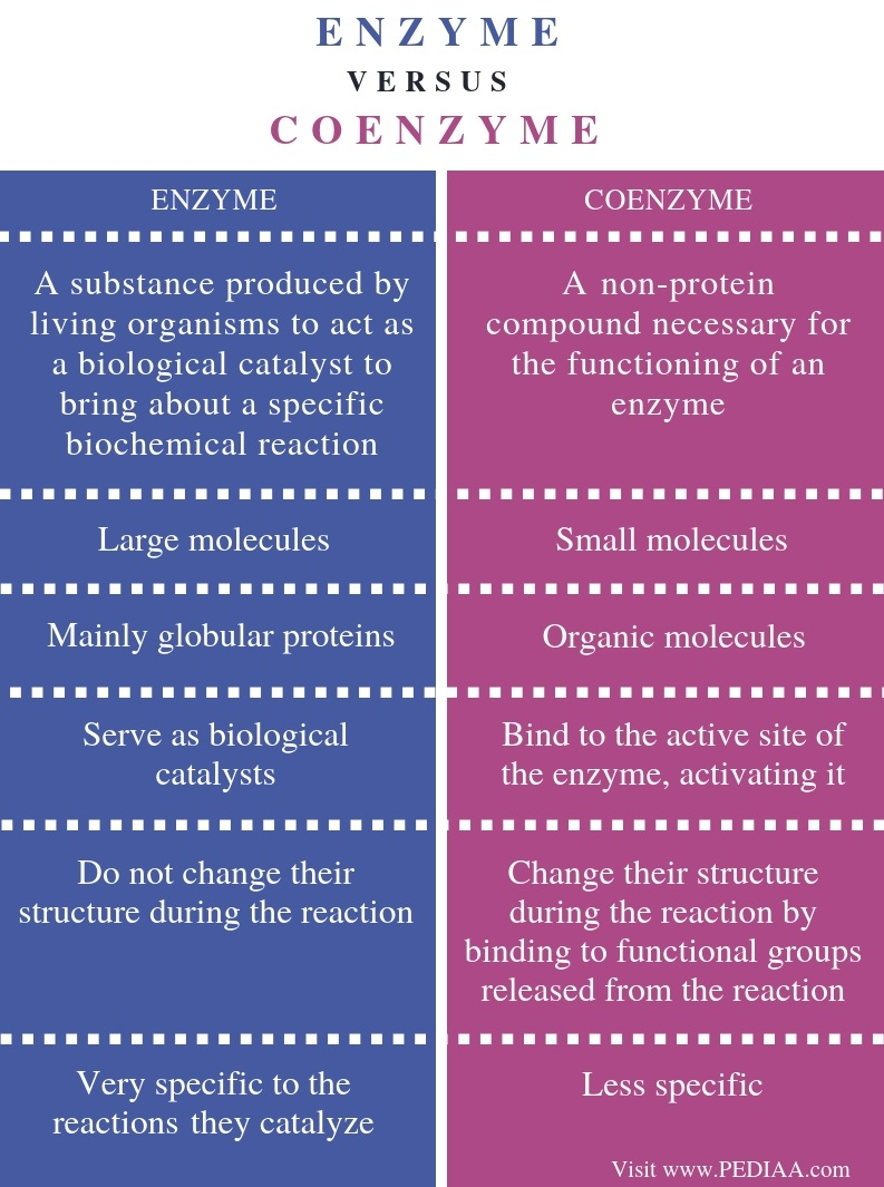 Difference Between Enzyme and Coenzyme - Comparison Summary