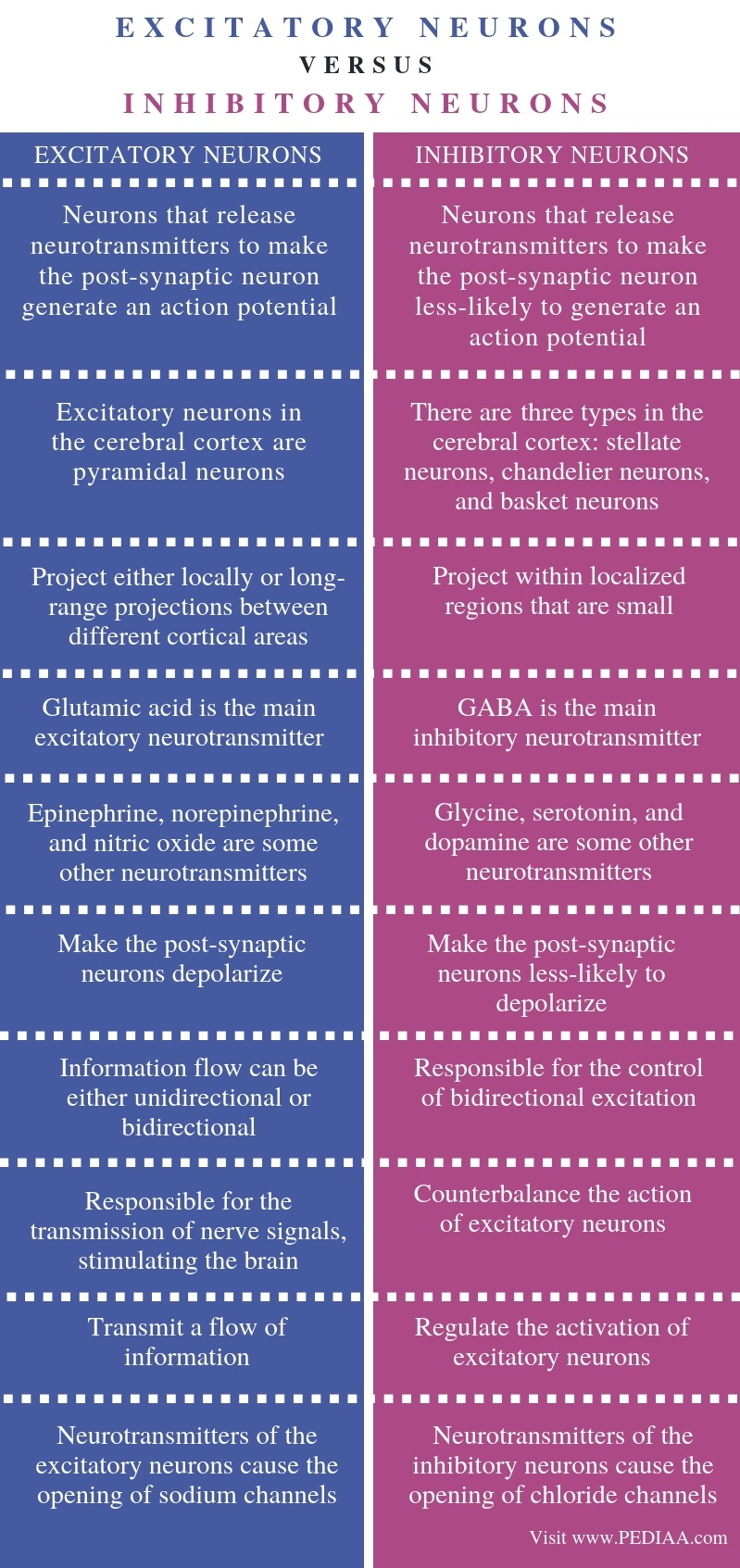 Difference Between Excitatory and Inhibitory Neurons - Comparison Summary