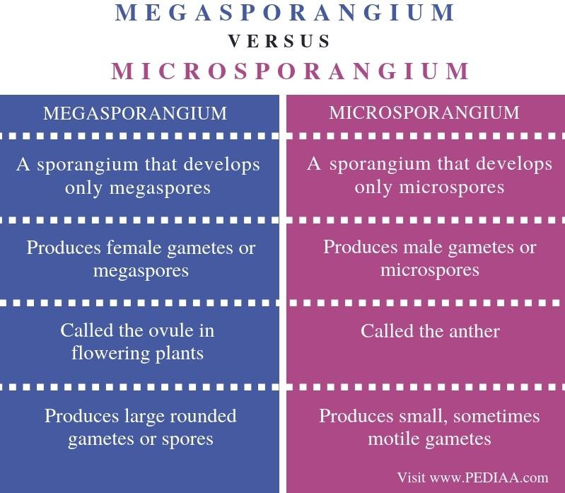 Difference Between Megasporangium and Microsporangium - Comparison Summary
