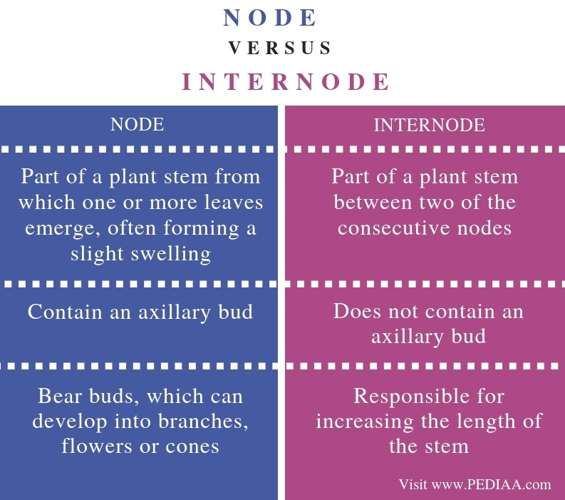 Difference Between Node and Internode - Comparison Summary