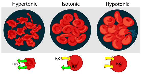 Difference Between Osmosis and Dialysis_Figure 1