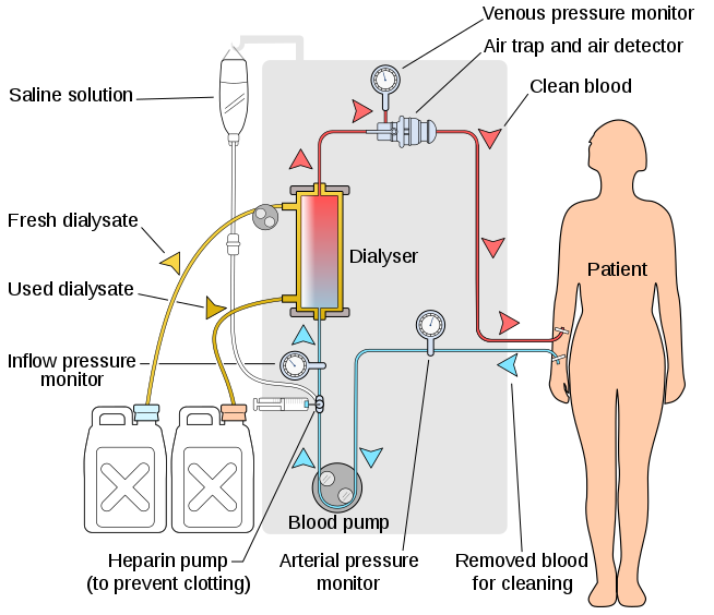 Difference Between Osmosis and Dialysis_Figure 2