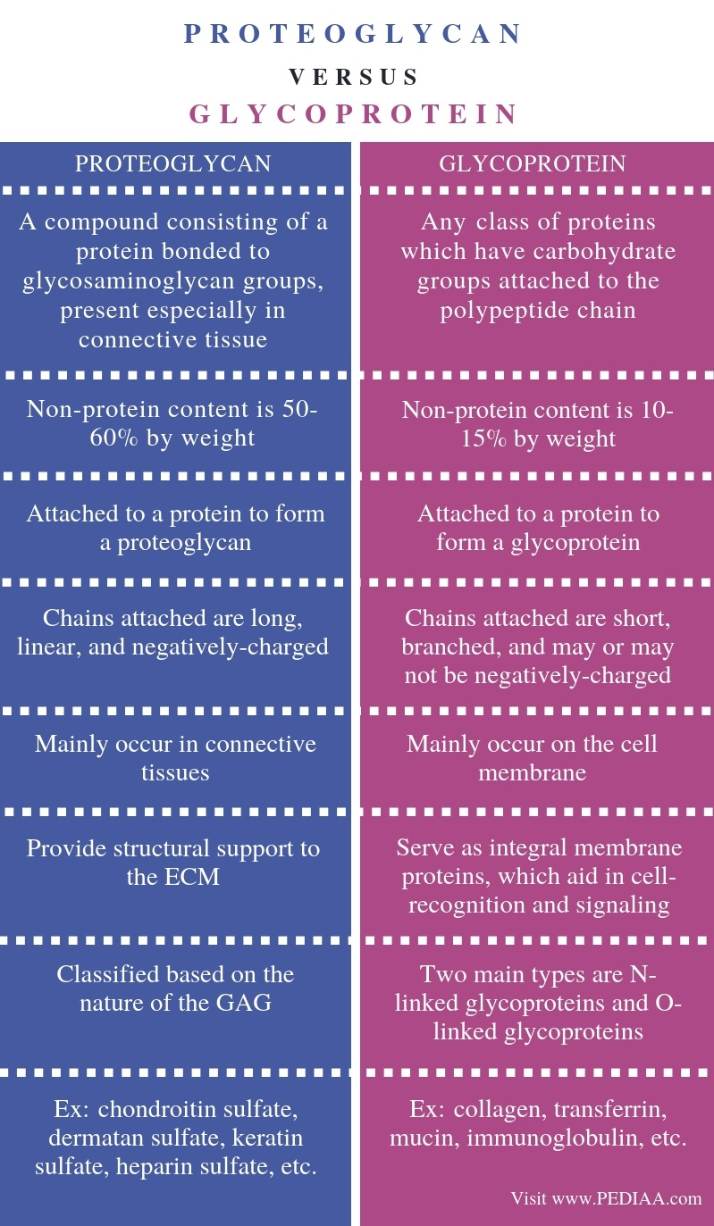 Difference Between Proteoglycan and Glycoprotein - Comparison Summary