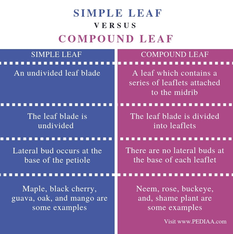 Difference Between Simple Leaf and Compound Leaf - Comparison Summary