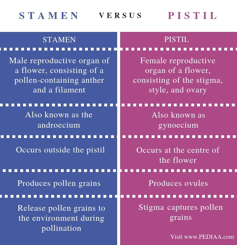 Difference Between Stamen and Pistil - Comparison Summary