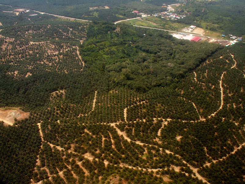 Main Difference - Habitat Change and Habitat Fragmentation