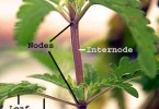 What is the Difference Between Node and Internode