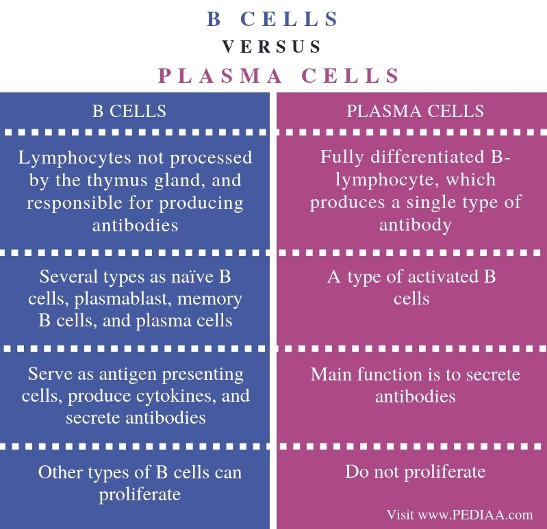 Difference Between B Cells and Plasma Cells - Comparison Summary