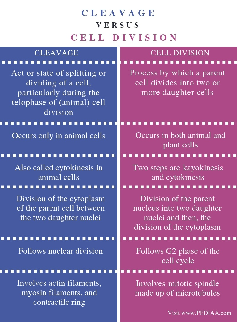 Difference Between Cleavage and Cell Division - Comparison Summary