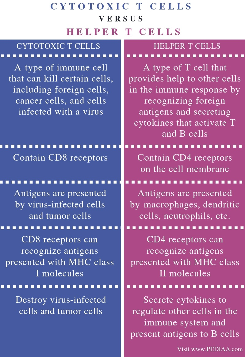 Difference Between Cytotoxic T Cells and Helper T Cells - Comparison Summary
