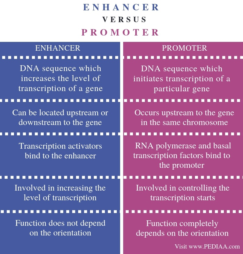 Difference Between Enhancer and Promoter - Comparison Summary