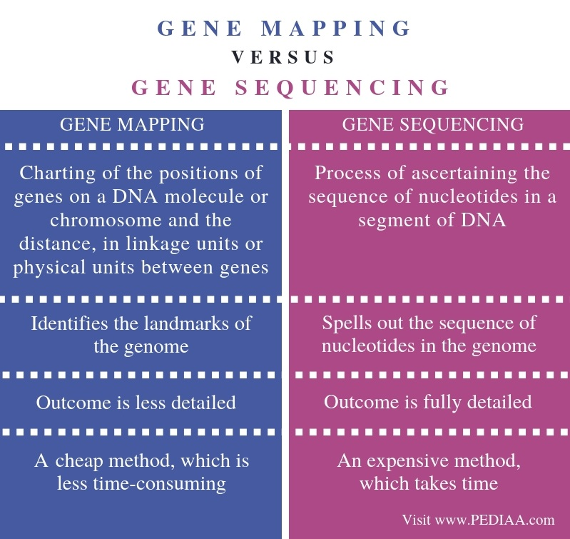 Difference Between Gene Mapping and Gene Sequencing - Comparison Summary