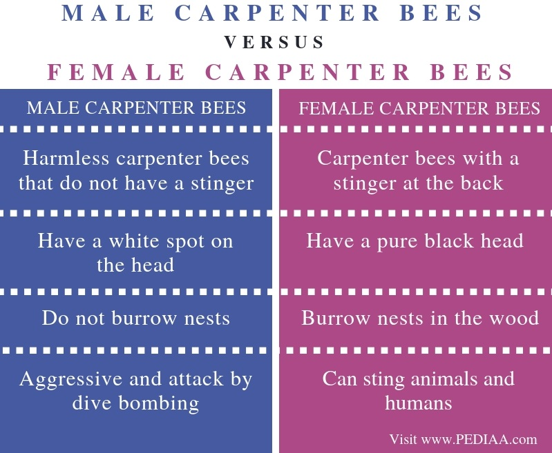 Difference Between Male and Female Carpenter Bees - Comparison Summary