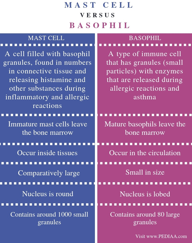 Difference Between Mast Cell and Basophil - Comparison Summary