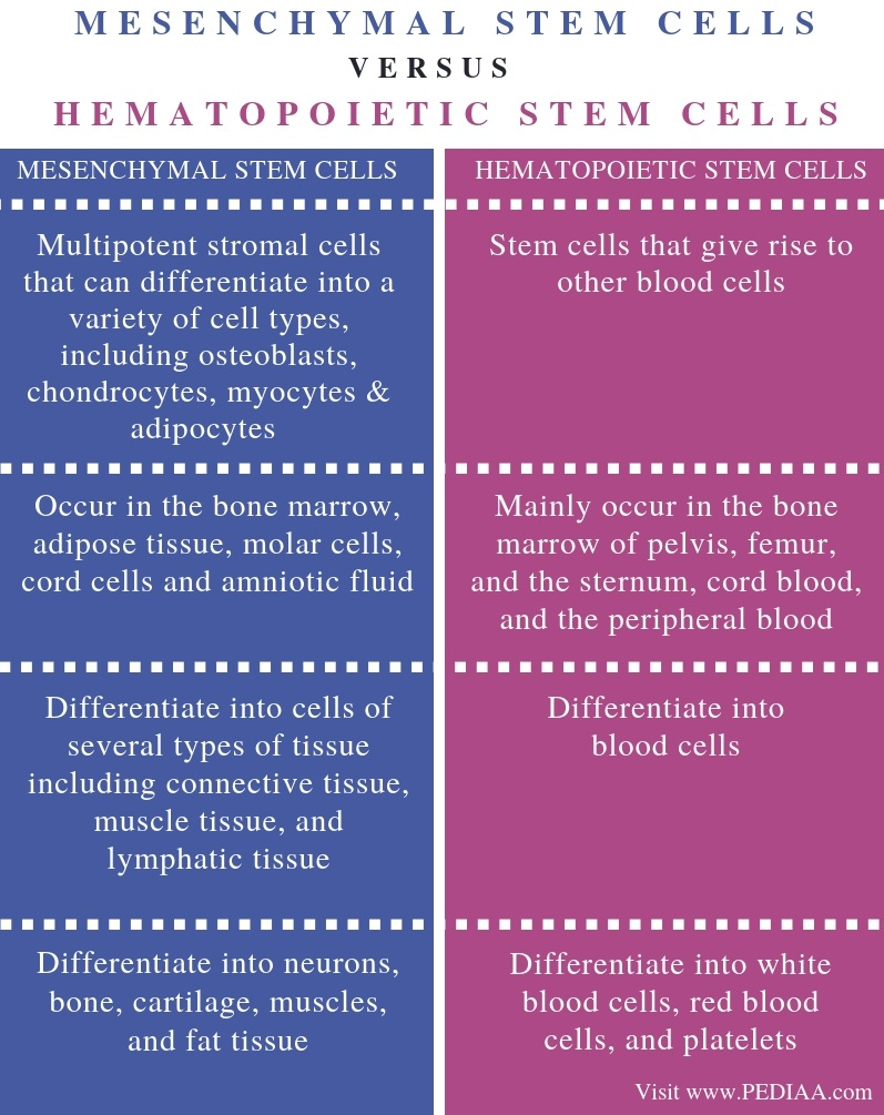Difference Between Mesenchymal and Hematopoietic Stem Cells - Comparison Summary
