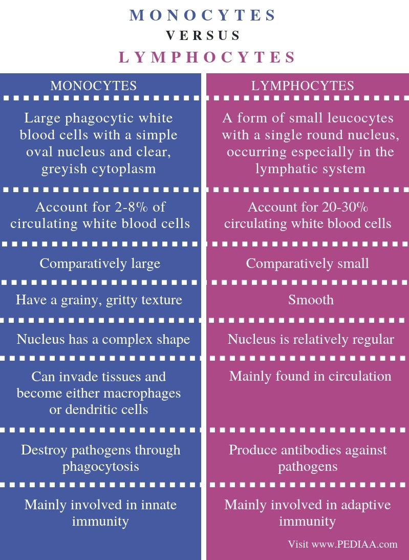 Difference Between Monocytes and Lymphocytes - Comparison Summary