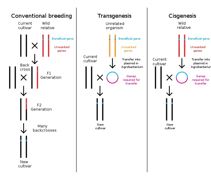 Difference Between Transgenic and Cisgenic