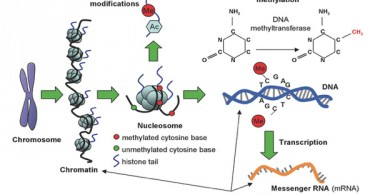 DNA Sequence Mutations and Epigenetic Modifications