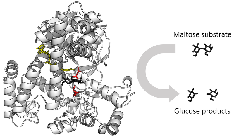 What is the Difference Between Enzyme and Protein_Figure 1