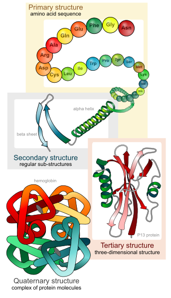 What is the Difference Between Enzyme and Protein_Figure 2