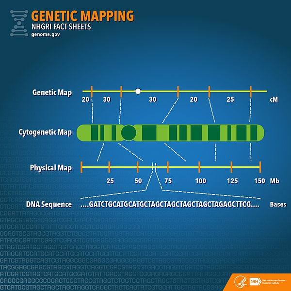 Difference Between Gene Mapping and Gene Sequencing_Figure 2