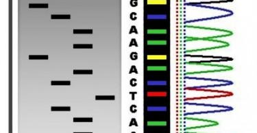 What is the Difference Between Gene Sequencing and DNA Fingerprinting