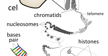 Difference Between Plasmid DNA and Chromosomal DNA