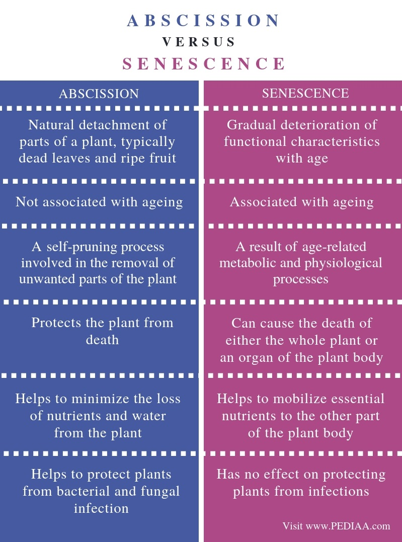 Difference Between Abscission and Senescence - Comparison Summary