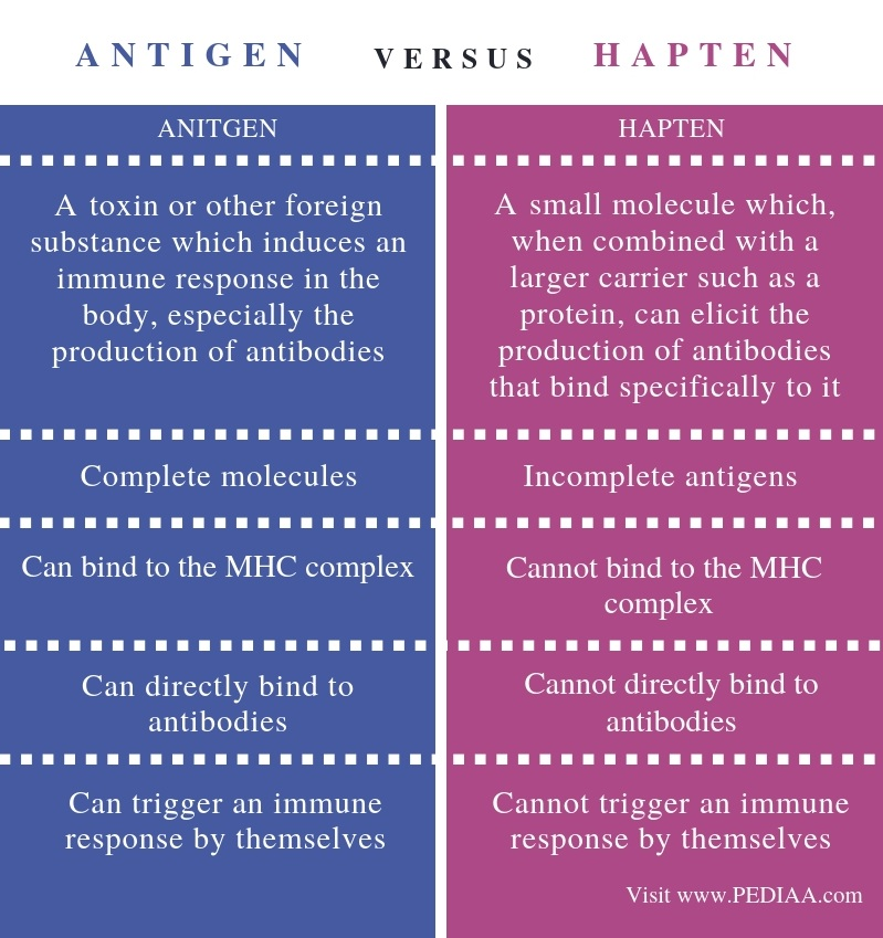 Difference Between Antigen and Hapten - Comparison Summary