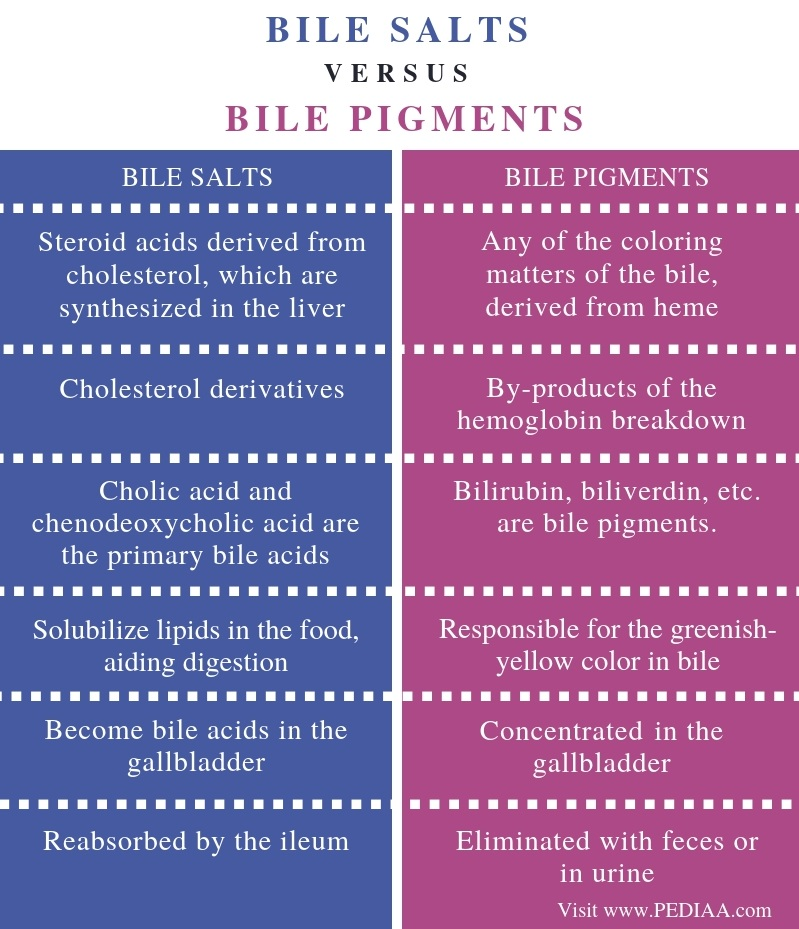 Difference Between Bile Salts and Bile Pigments - Comparison Summary