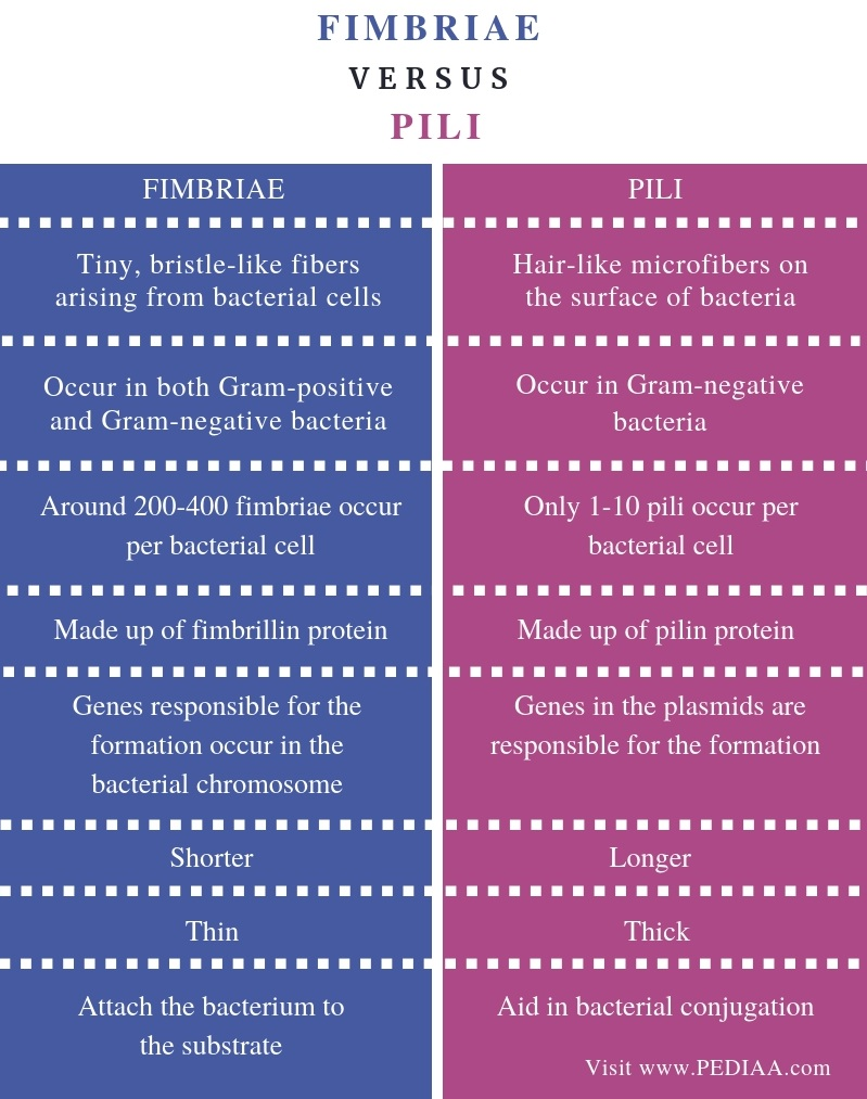 Difference Between Fimbriae and Pili - Comparison Summary