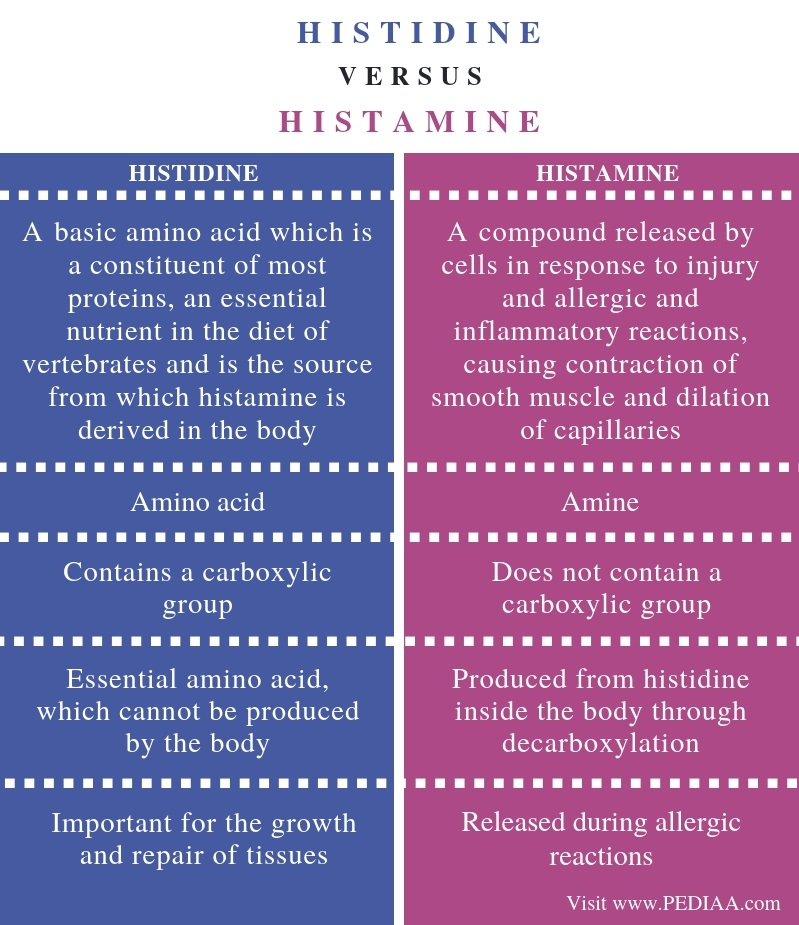 Difference Between Histidine and Histamine - Comparison Summary
