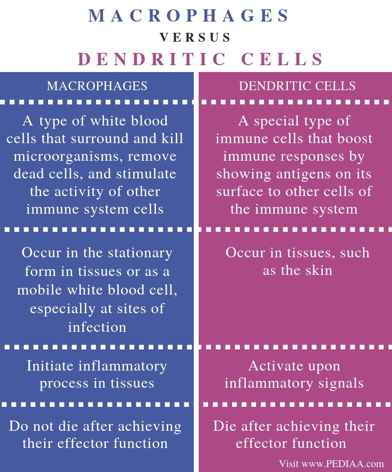 Difference Between Macrophages and Dendritic Cells - Comparison Summary